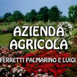 ferretti_palmarino_e_luigi