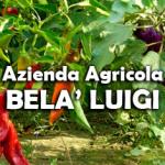 bela_luigi