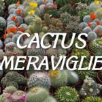 cactus_meraviglie