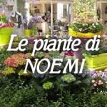 piante_di_noemi